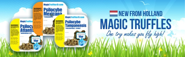 Buy Magic Truffles @ Magicmushroom.com