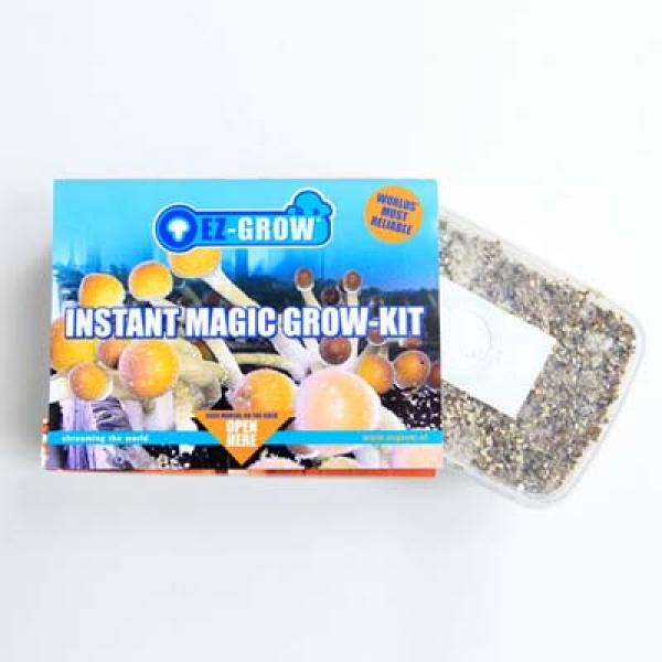 Buy Ready 2 Growkit Colombian at Magicmushroom com